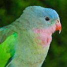 Princess Parrot Profile by Penny Smith