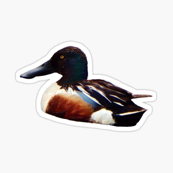 Shoveler Sticker