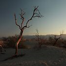 Tree at Mesquite Flat Sand Dunes by Daniel Owens