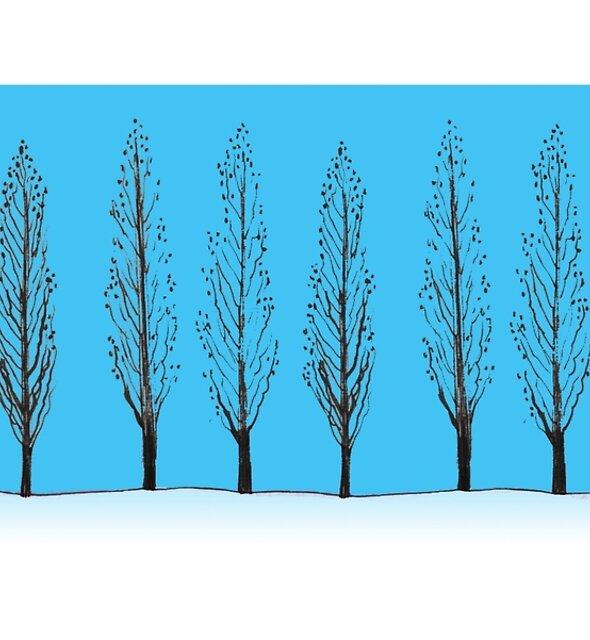 Poplars in a blue sky by ArtOfMug