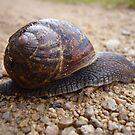 Snail by Goldendays