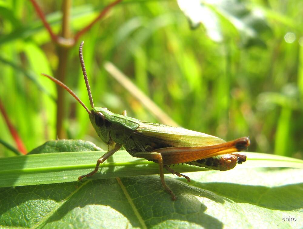 Grasshopper 2 by shiro