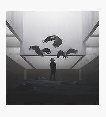 Vultures Photographic Print
