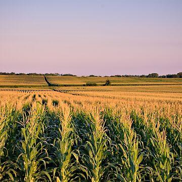 A Sea Of Corn by LynyrdSky