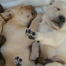Hush Little Puppies by tawaslake