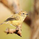 Little Birdy by CBoyle