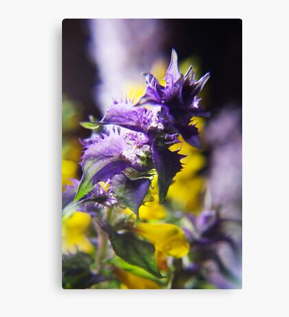 Violet and Yellow (from wild flowers collection) Canvas Print