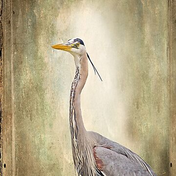 Great Blue Heron by Photograph2u