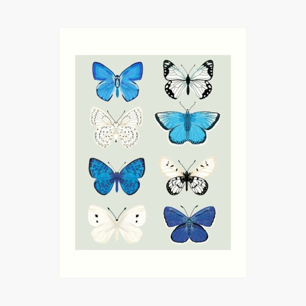 Lepitoptery No. 2 - Blue and White Butterflies and Moths Art Print