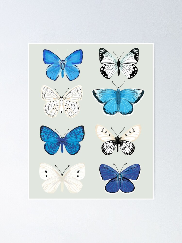 Alternate view of Lepitoptery No. 2 - Blue and White Butterflies and Moths Poster
