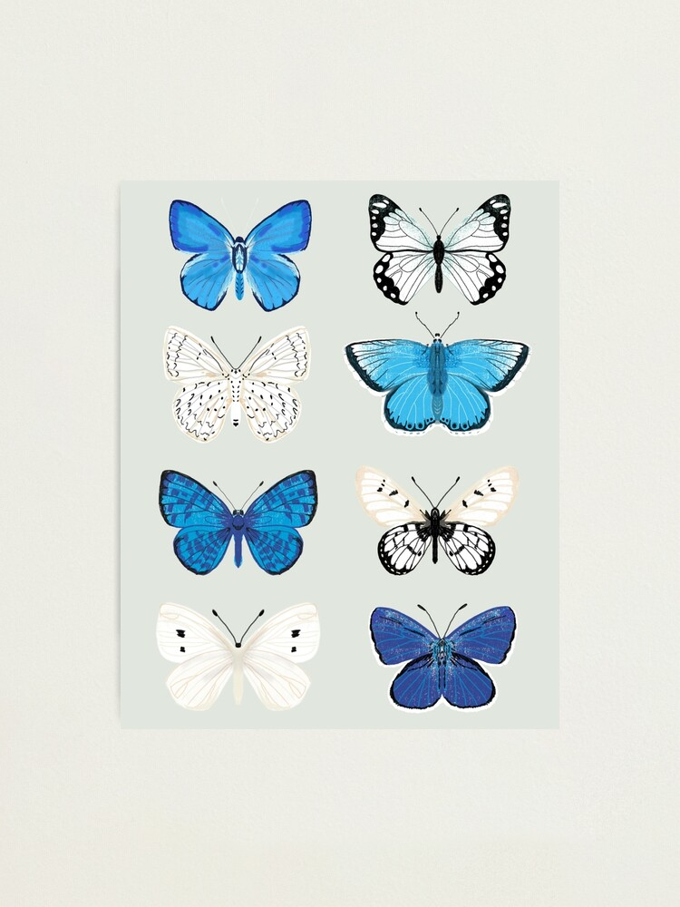 Alternate view of Lepitoptery No. 2 - Blue and White Butterflies and Moths Photographic Print