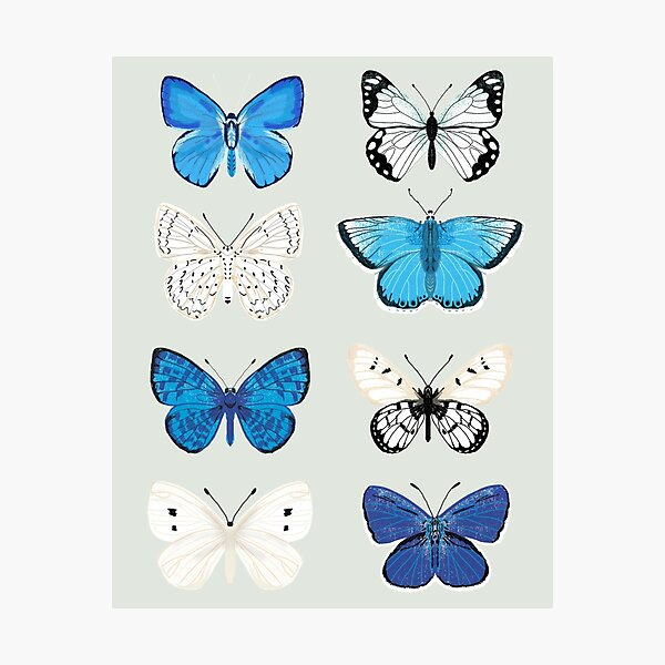 Lepitoptery No. 2 - Blue and White Butterflies and Moths Photographic Print
