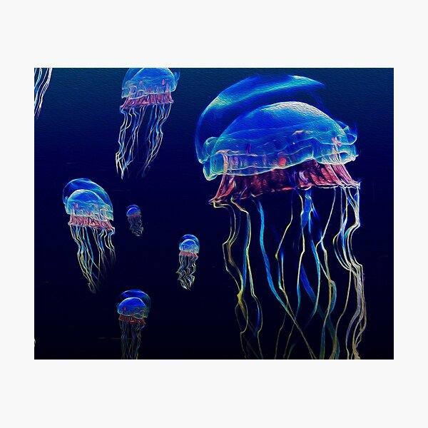 jelly fish  Photographic Print