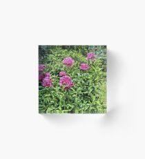 Pink Peonies 2 - Pennsylvania Acrylic Block