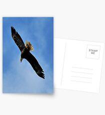 Flying Free beautiful Bald Eagle Postcards