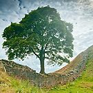 Sycamore Gap, Hadrians Wall by Stephen Knowles