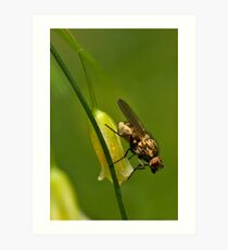 Asparagus flower and insect Art Print