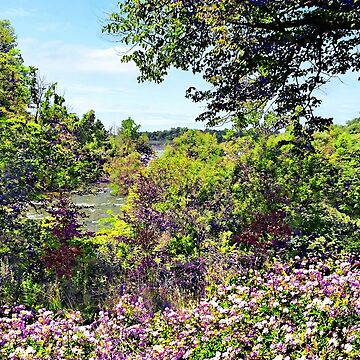 Niagara Falls, NY - Wildflowers on Three Sisters Islands by SudaP0408