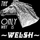 The Only Way is Welsh - Welsh Pony Appreciation by Ladyfyre