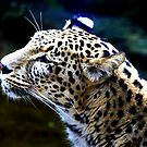 Persian Leopard by Wayne Gerard Trotman