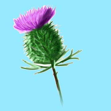 Thistle  by Lauramazing
