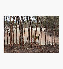 Mallet Woodland Photographic Print