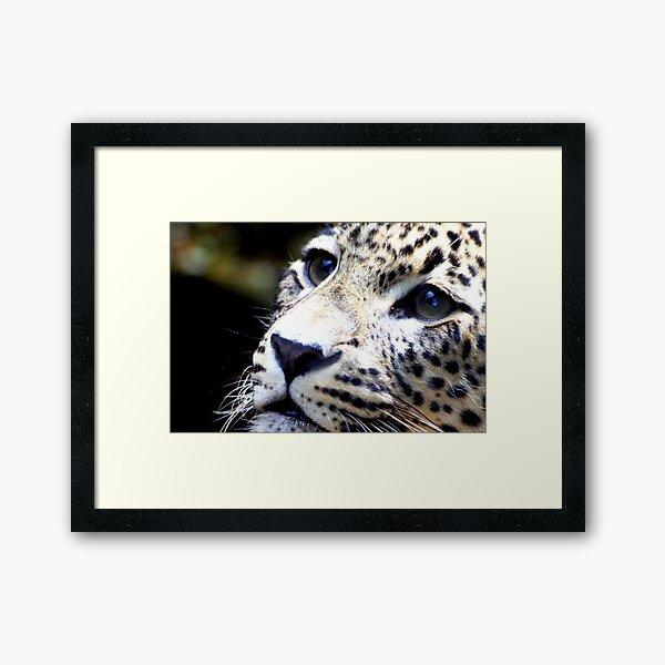 Persian Leopard Framed Art Print