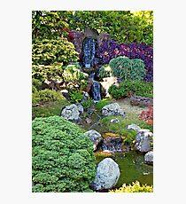 SF Japanese Tea Garden Study 26  Photographic Print