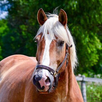 Horse Portrait by Colette22