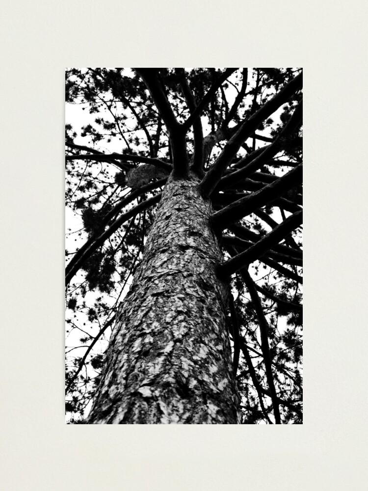 Alternate view of Monochrome Tree Photographic Print