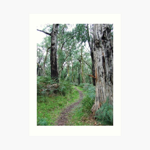 Baldrys bush track Art Print