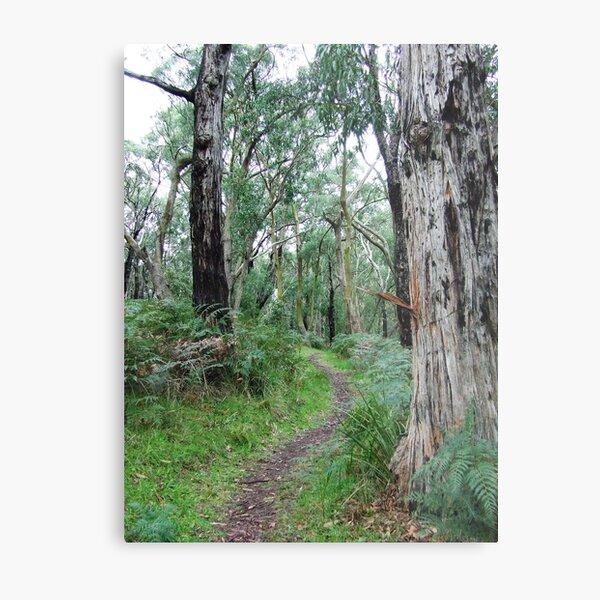 Baldrys bush track Metal Print