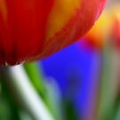 Tulip  by Deanna Roberts Think in Pictures