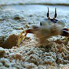 High Speed Crab by Sam McCabe