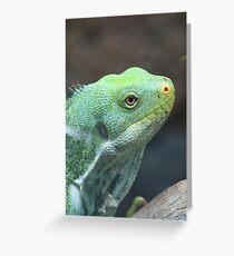 Fijian Crested Iguana Greeting Card