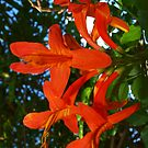 Orange Passion by Kylie Van Ingen