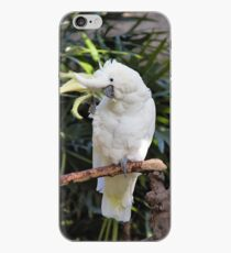 A Friendly Sulfur-Crested Cockatoo Salutes the Photographer iPhone Case