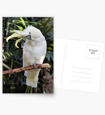A Friendly Sulfur-Crested Cockatoo Salutes the Photographer Postcards