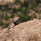 Lizards by Richard G Witham