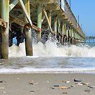 Sea Shells By The Sea Shore by ©Dawne M. Dunton