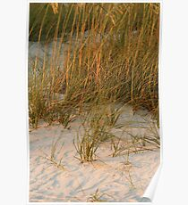 Dunes in Late day sunlight Poster