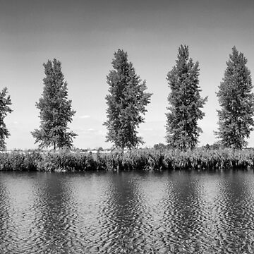 Eight trees on the Amstel River by stuwdamdorp
