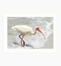 Ibis in the Surf Art Print