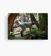 Cat in the Wild Canvas Print