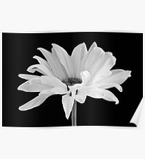 Lone Daisy Poster