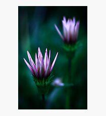 Colour Of Life XVI [Print & iPad Case] Photographic Print