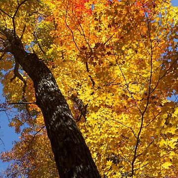 Autumn Foliage Delight In Vivid Yellow, Red And Orange by GeorgiaM
