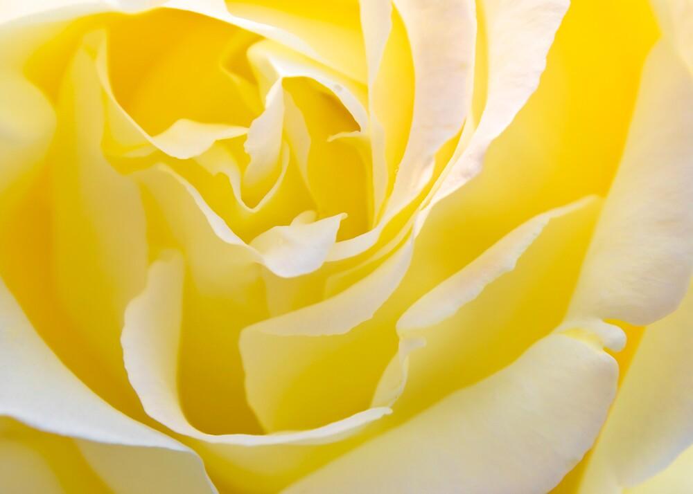 Inside Yellow Rose by Svetlana Sewell