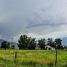 Stormy by marilyn diaz