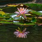 Lilly and Reflection by TJ Baccari Photography